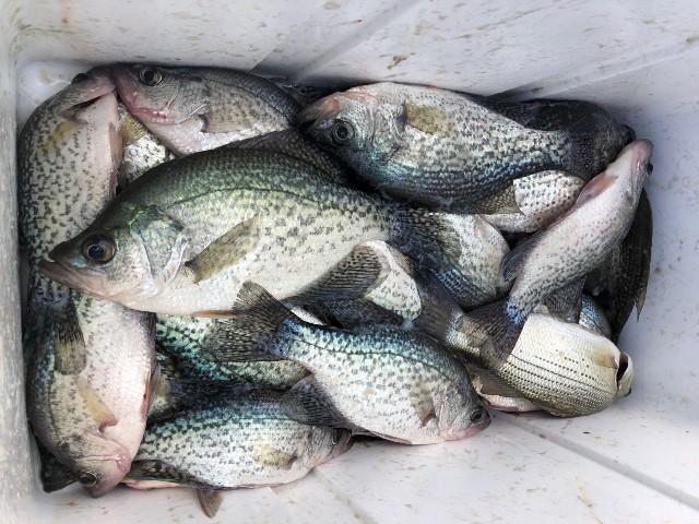 Lake Oconee Fishing Report 3 November 2020 - Lake Oconee Fishing Guides