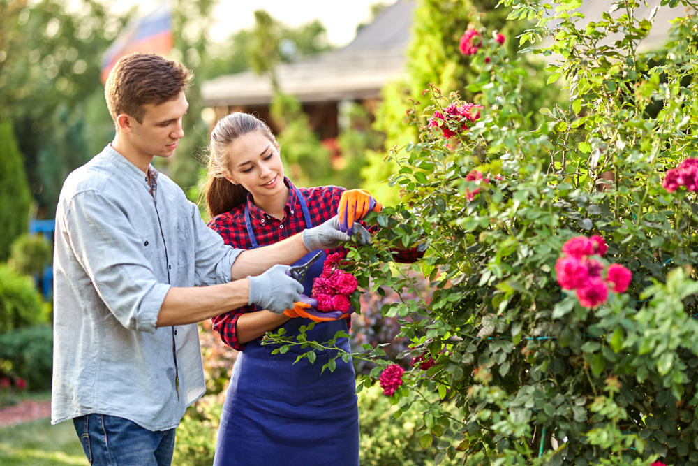 How To Find The Best Landscape Construction Contractor in Vancouver